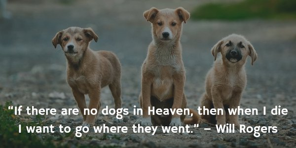 Will Rogers picture quote: If there are no dogs in Heaven, then when I die I want to go where they went.
