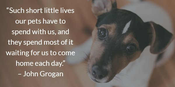 John Grogan picture quote about the short lives of dogs