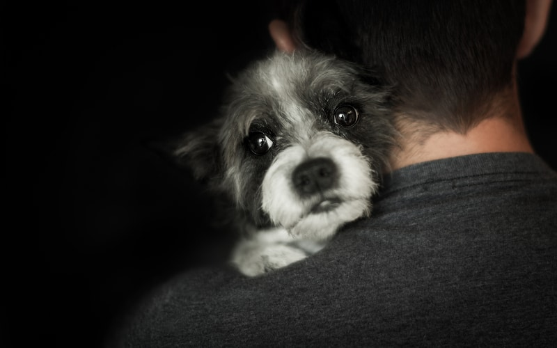 Dog looking over the shoulder of his owner as he's being held