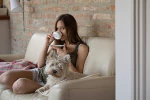 Terrier dog sitting on a couch with a young lady